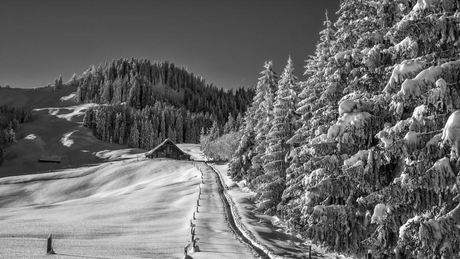 Hulftegg, Switzerland Leica Monochrom, 35mm Summicron, medium red filter