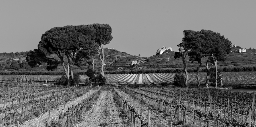 just a random shot taken at an unknown place in Southern France Leica Monochrom, 24mm, red filter