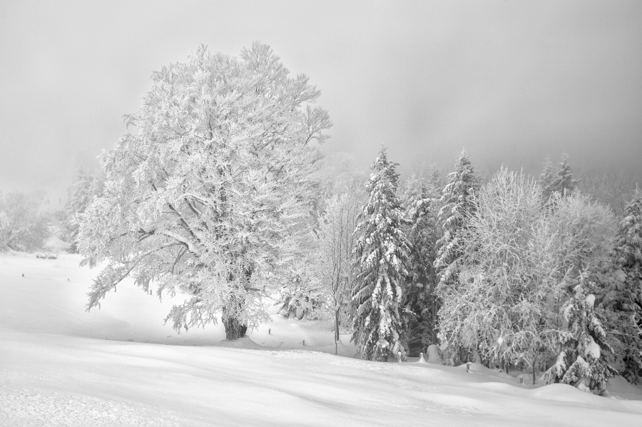 Foggy day, Hulftegg, Switzerland Leica Monochrom, 35mm Summicron