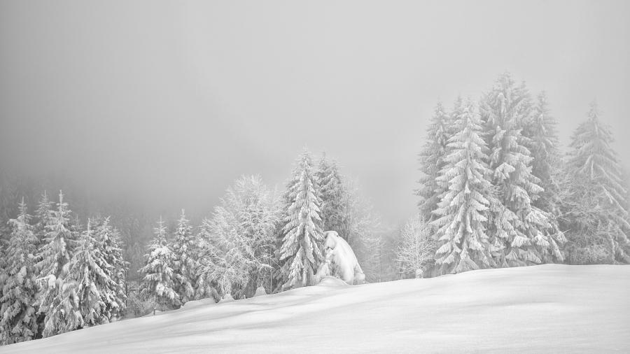 Snowqueen, Hulftegg, Switzerland Leica Monochrom, Summicron 35mm